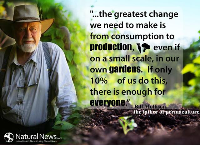 permaculture 1 bill mollison pdf