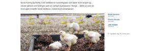 Kjøp kylling på Rema 1000